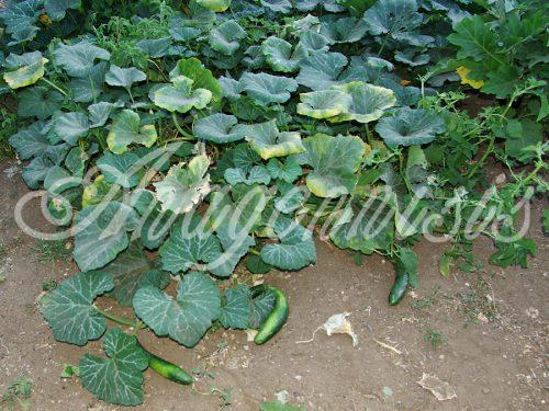 07. Anagennisis Restaurant | Vegetable Garden