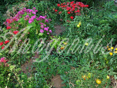 09. Anagennisis Restaurant | Vegetable Garden