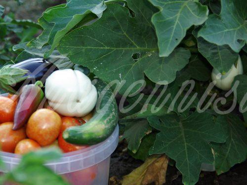 17. Anagennisis Restaurant | Vegetable Garden
