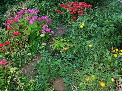 07. Anagennisis Restaurant | Vegetable Garden