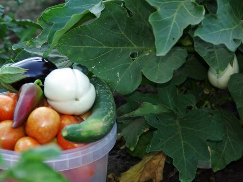 15. Anagennisis Restaurant | Vegetable Garden